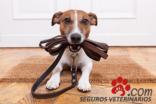 comparador seguros mascotas - Seguros Veterinarios