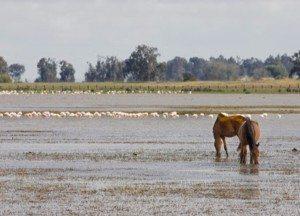 doñana 300x216 - Comarca de Doñana